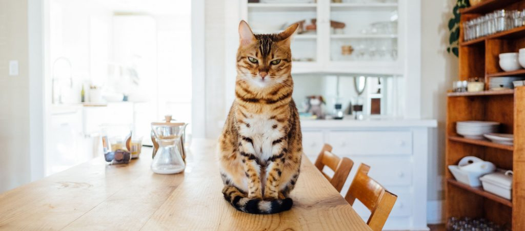 Cat sits on a table